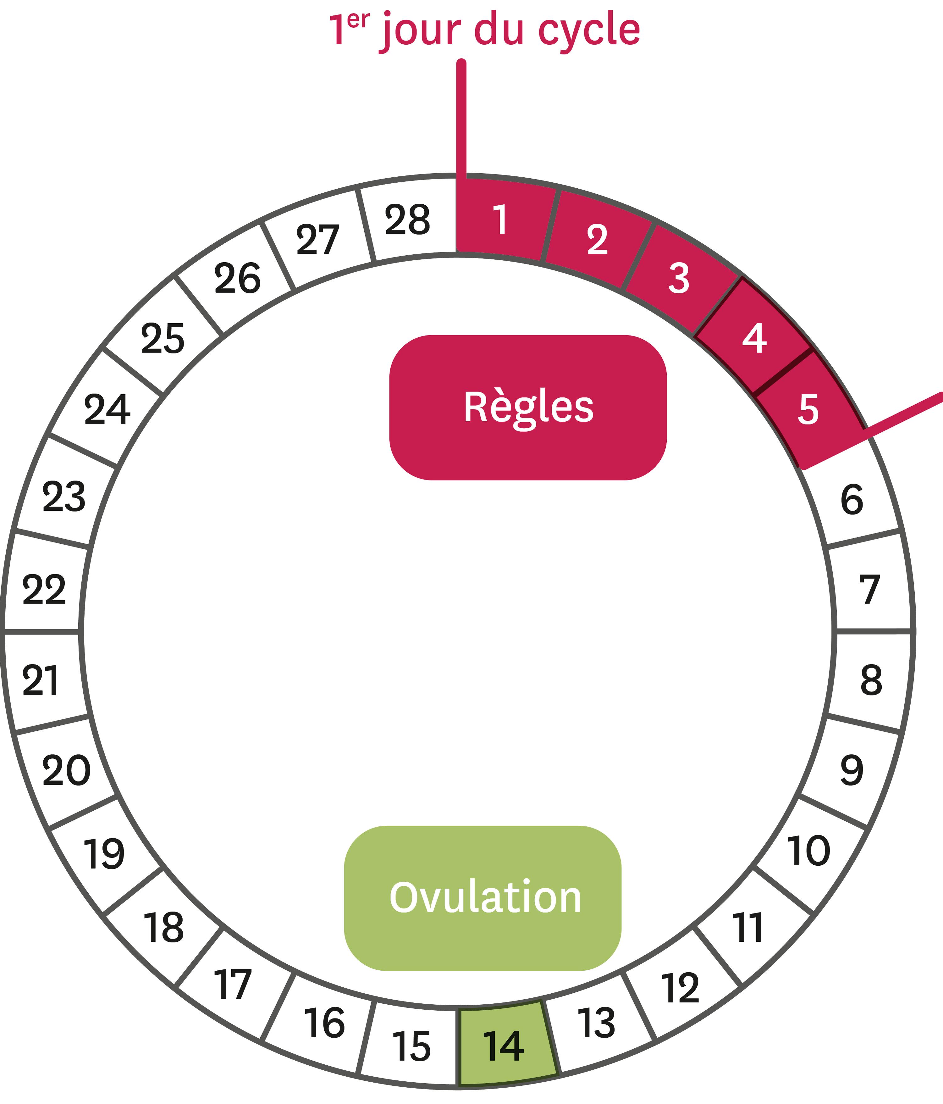 <stamp theme='svt-green1'>Doc. 2</stamp> Le cycle féminin théorique.