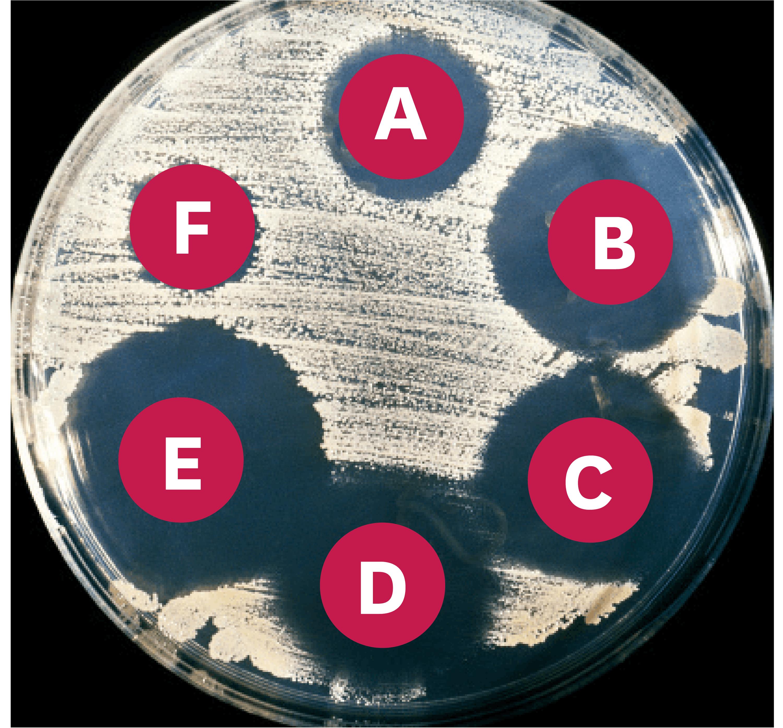 <stamp theme='svt-green1'>Doc. 3</stamp> Les résultats d'un antibiogramme.