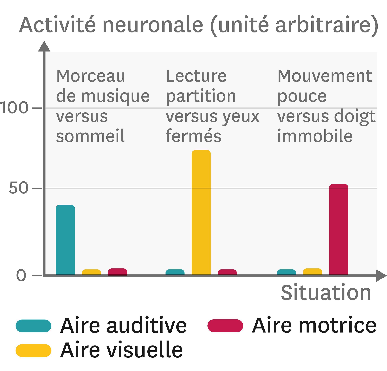 <stamp theme='svt-green1'>Doc. 6</stamp> L'activité des neurones dans différentes zones cérébrales.