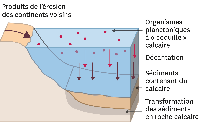 <stamp theme='svt-green1'>Doc. 7</stamp> La formation du calcaire.