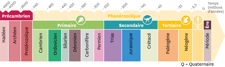 <stamp theme='svt-green1'>Doc. 1</stamp> Le découpage du temps en ères et périodes géologiques.