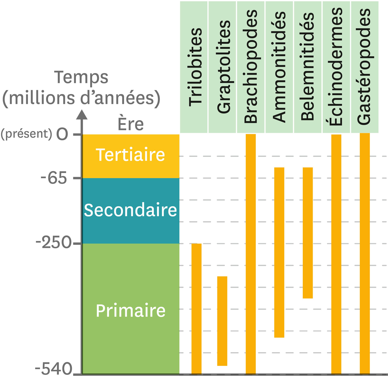 <stamp theme='svt-green1'>Doc. 5</stamp> Une répartition de quelques fossiles marins au cours des temps géologiques.