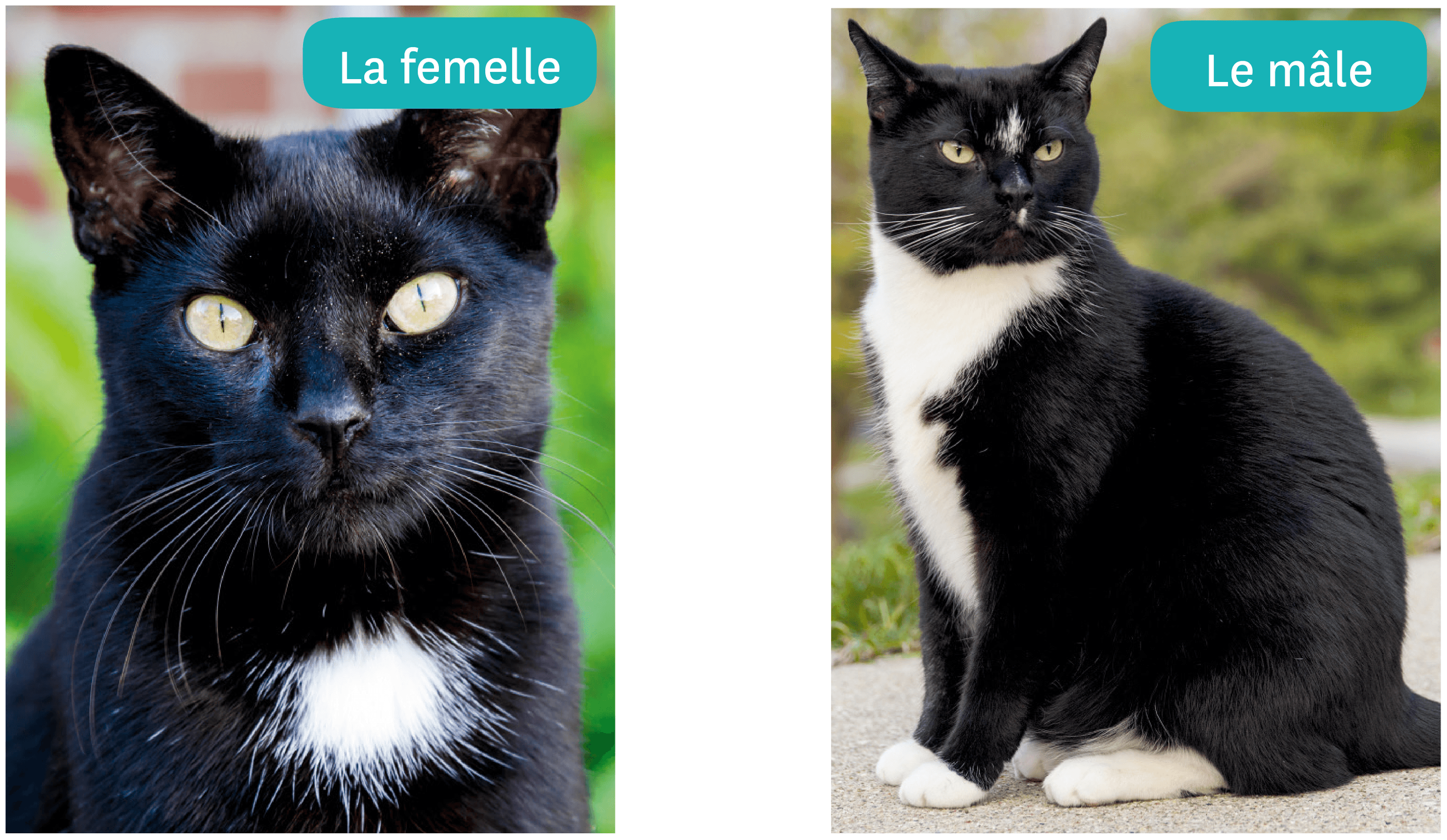 <stamp theme='svt-green1'>Doc. 1</stamp> Les chats de Camille.