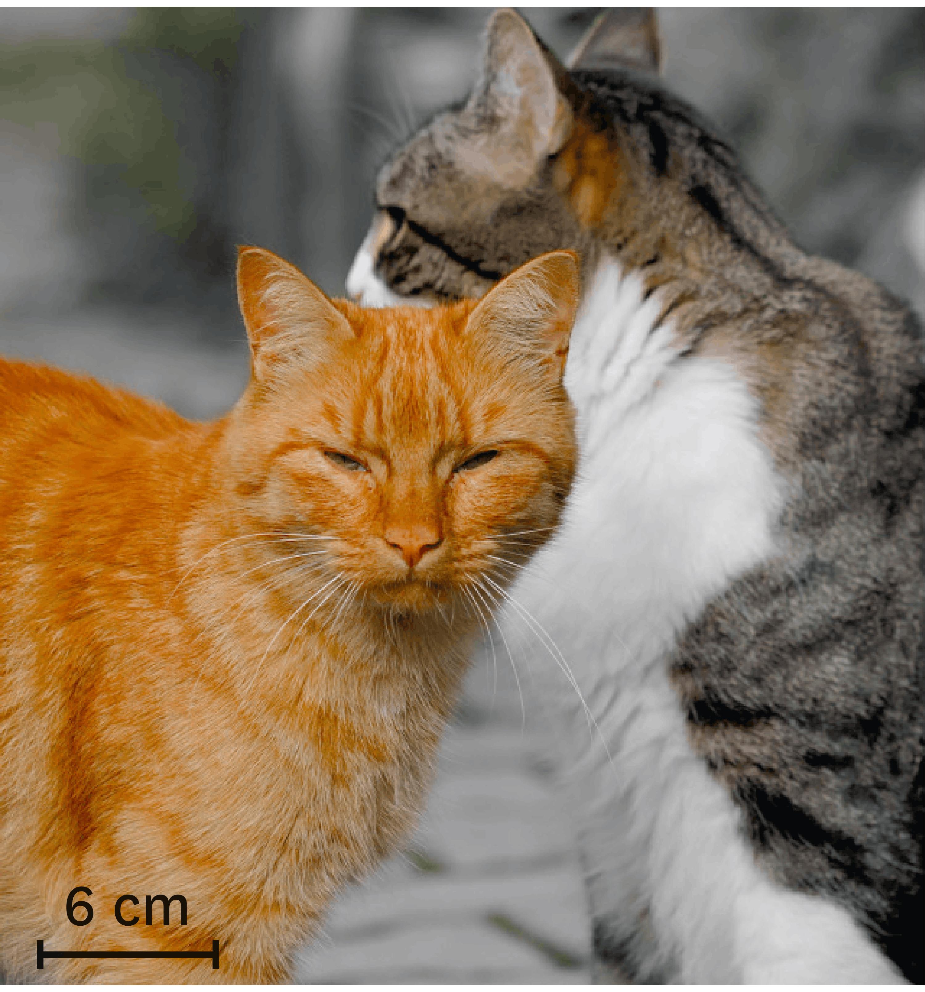 <stamp theme='svt-green1'>Doc. 5</stamp> Des chats de différentes couleurs.