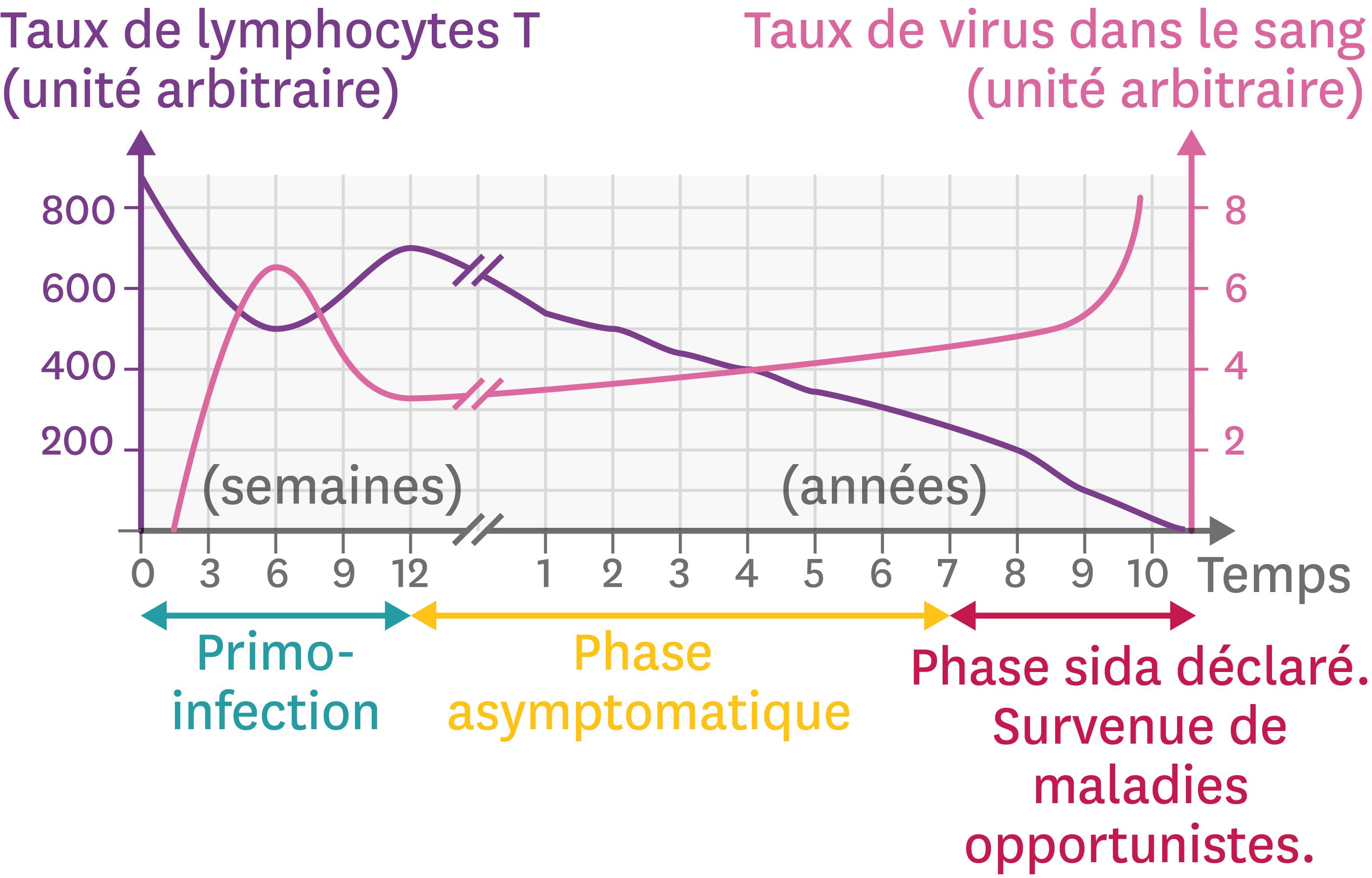 <stamp theme='svt-green1'>Doc. 2</stamp> L'évolution de l'infection par le VIH en fonction du temps.