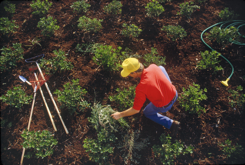 Yann F. : « C'est un métier de création qui nécessite une bonne connaissance des plantes. »