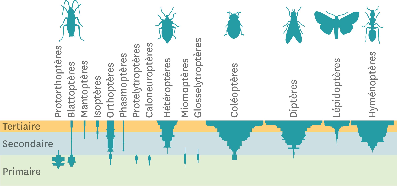<stamp theme='svt-green1'>Doc. 3</stamp> La diversité des insectes au cours de l'histoire de la Terre.