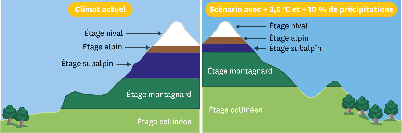<stamp theme='svt-green1'>Doc. 6</stamp> Une simulation des conséquences du réchauffement climatique sur la végétation en montagne.