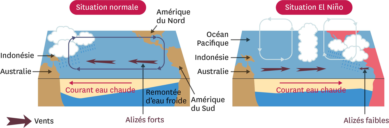 <stamp theme='svt-green1'>Doc. 4</stamp> La comparaison entre une situation normale dans le Pacifique tropical et une situation El Niño.