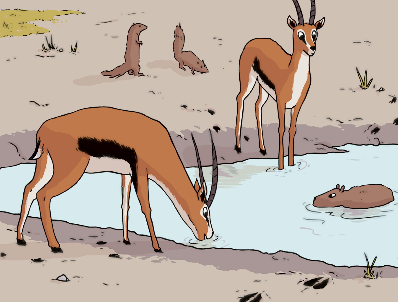 <stamp theme='svt-green1'>Doc. 6</stamp> Quelques mammifères vivant près du lac.