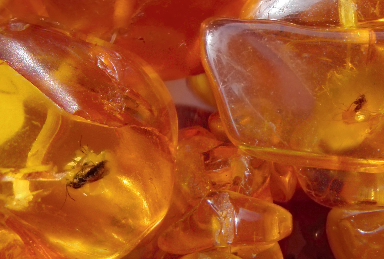 <stamp theme='svt-green1'>Doc. 4</stamp> De l'ambre (résine) avec des inclusions d'insectes.