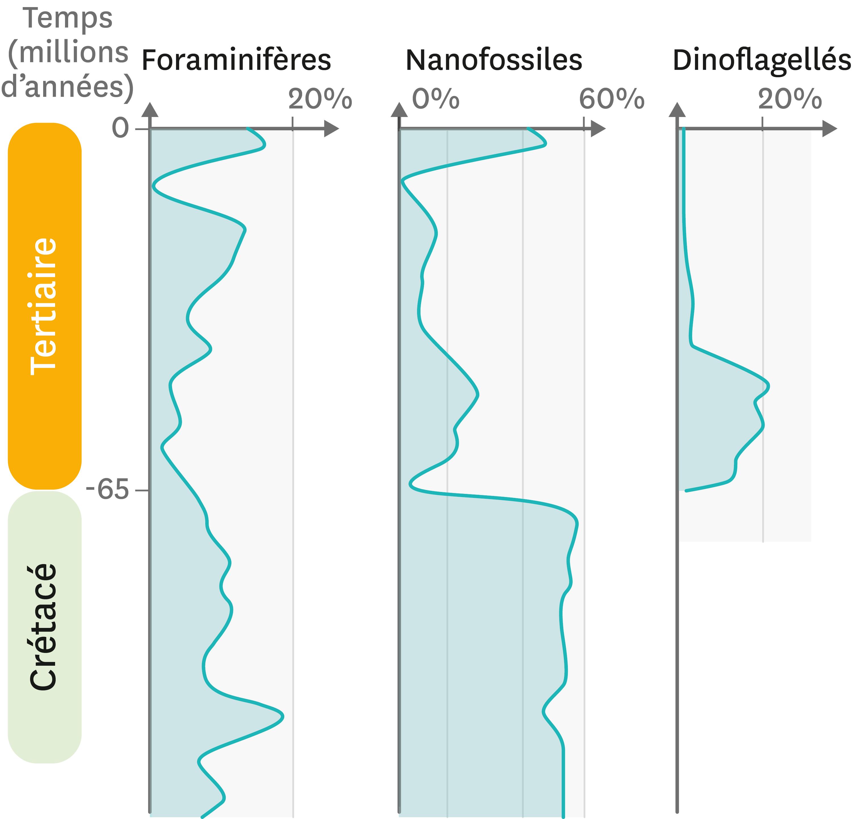 <stamp theme='svt-green1'>Doc. 1</stamp> La fréquence de quelques fossiles microscopique dans les roches du site de Bidart en France, au niveau du Crétacé et du Tertiaire.