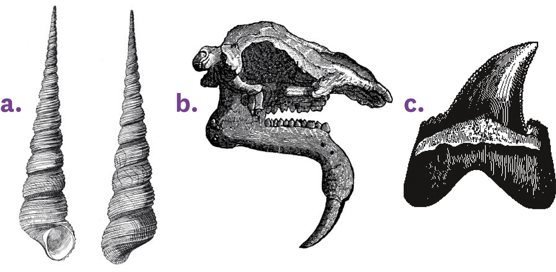 <stamp theme='svt-green1'>Doc. 1</stamp> Des fossiles retrouvés à Pontlevoy, près de Tours.