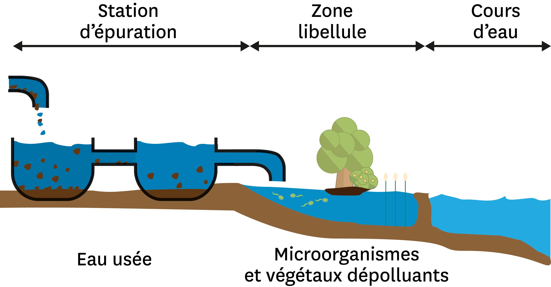 <stamp theme='svt-green1'>Doc. 6</stamp> Une zone humide artificielle entre une station d'épuration et un cours d'eau.