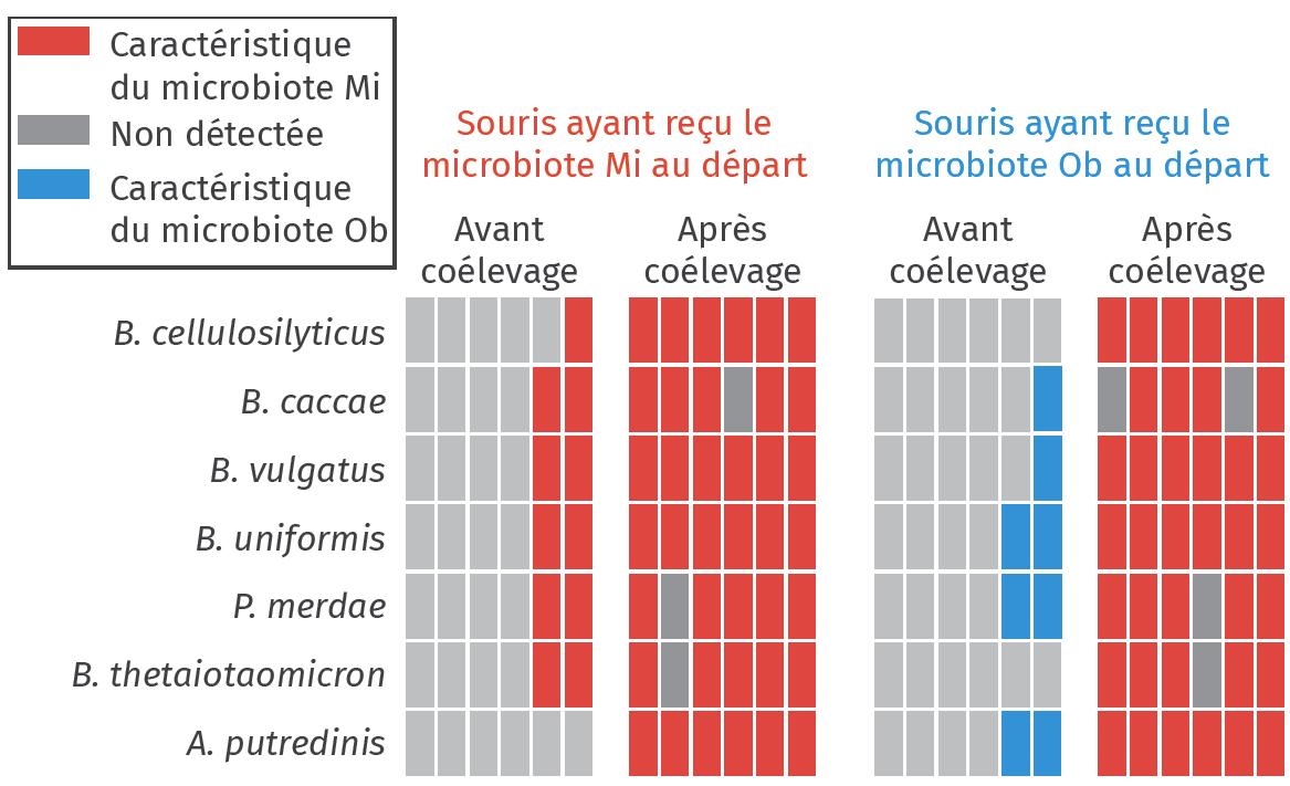 Changement du microbiote des souris au cours de l'expérience de coélevage