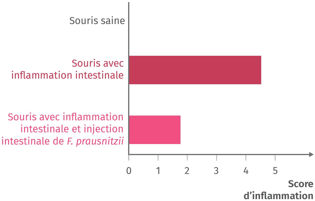 Effet des bactéries Faecalibacterium prausnitzii sur des inflammations intestinales