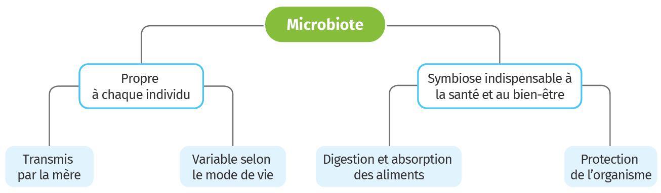 Carte mentale Microbiote humain et santé
