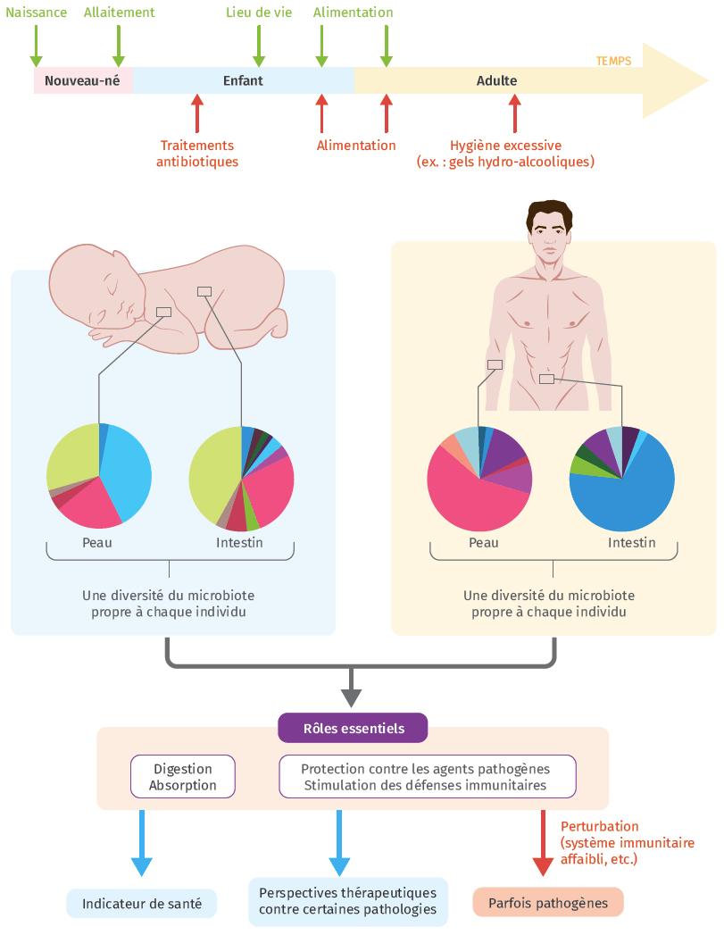 Schéma bilan Microbiote humain et santé