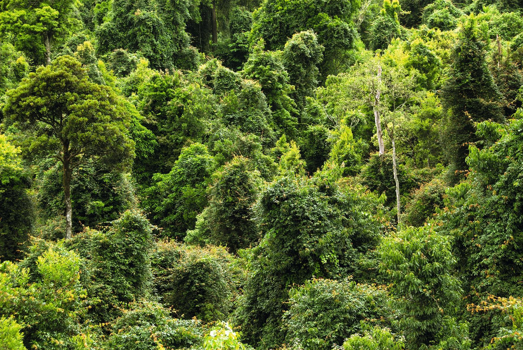 La respiration des plantes