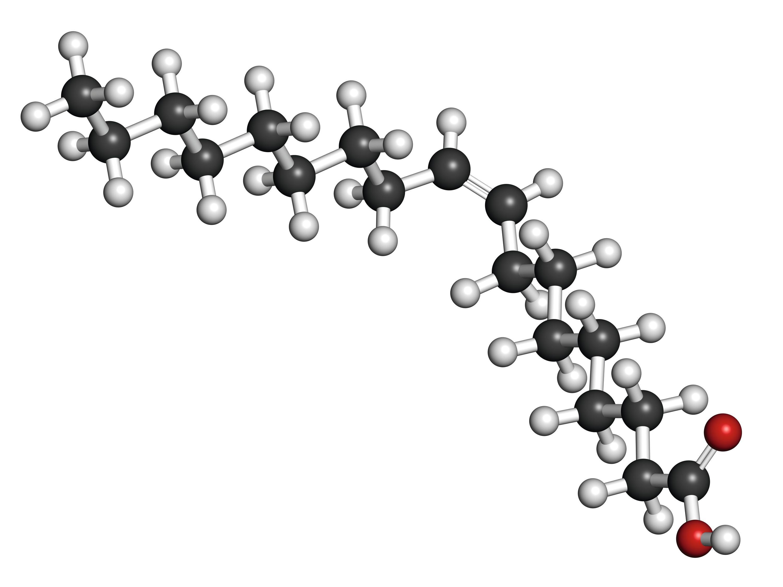 L'acide oléique (modèle moléculaire)