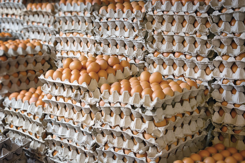 Boites d'œufs