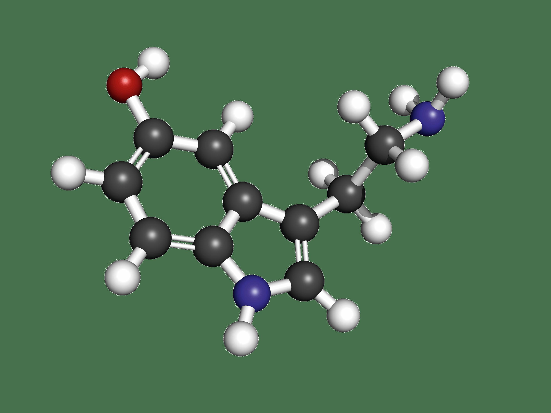 Modèle moléculaire de la sérotonine