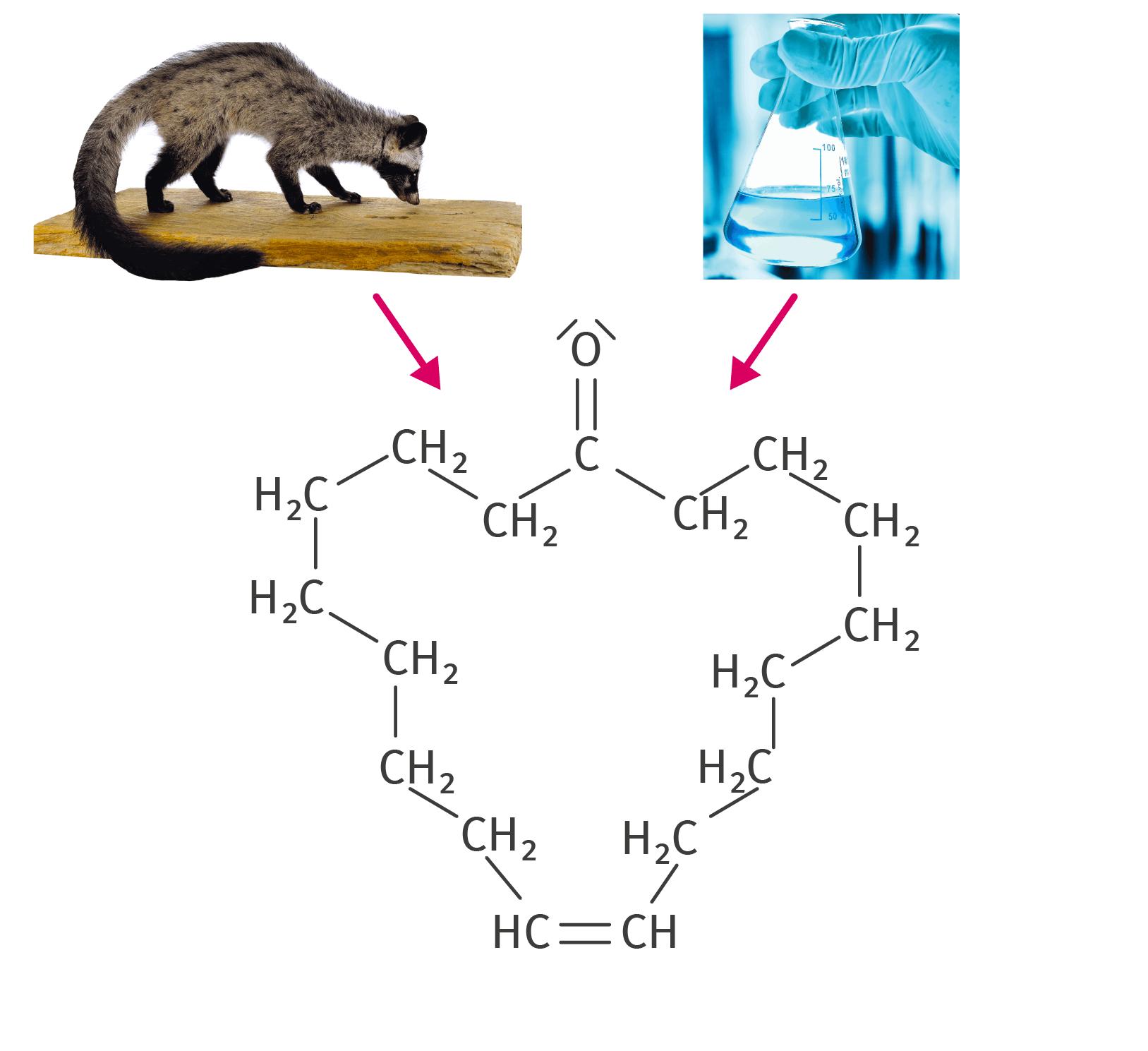Molécule de civettone