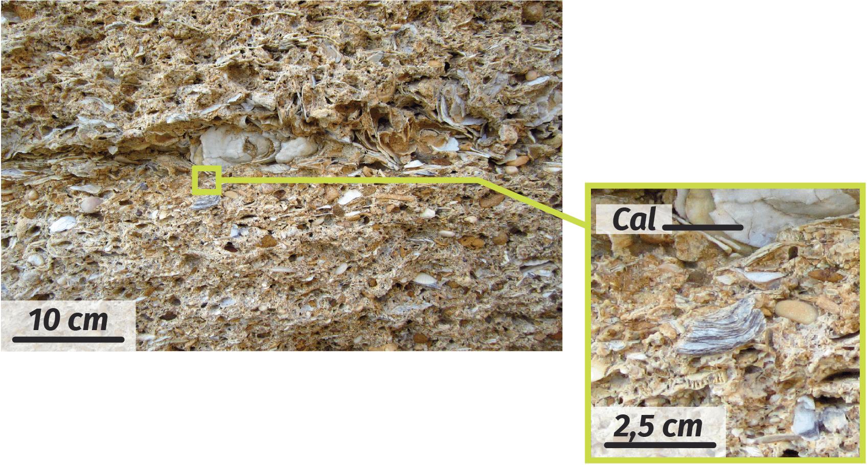 Observation à l'œil nu d'un calcaire coquillier