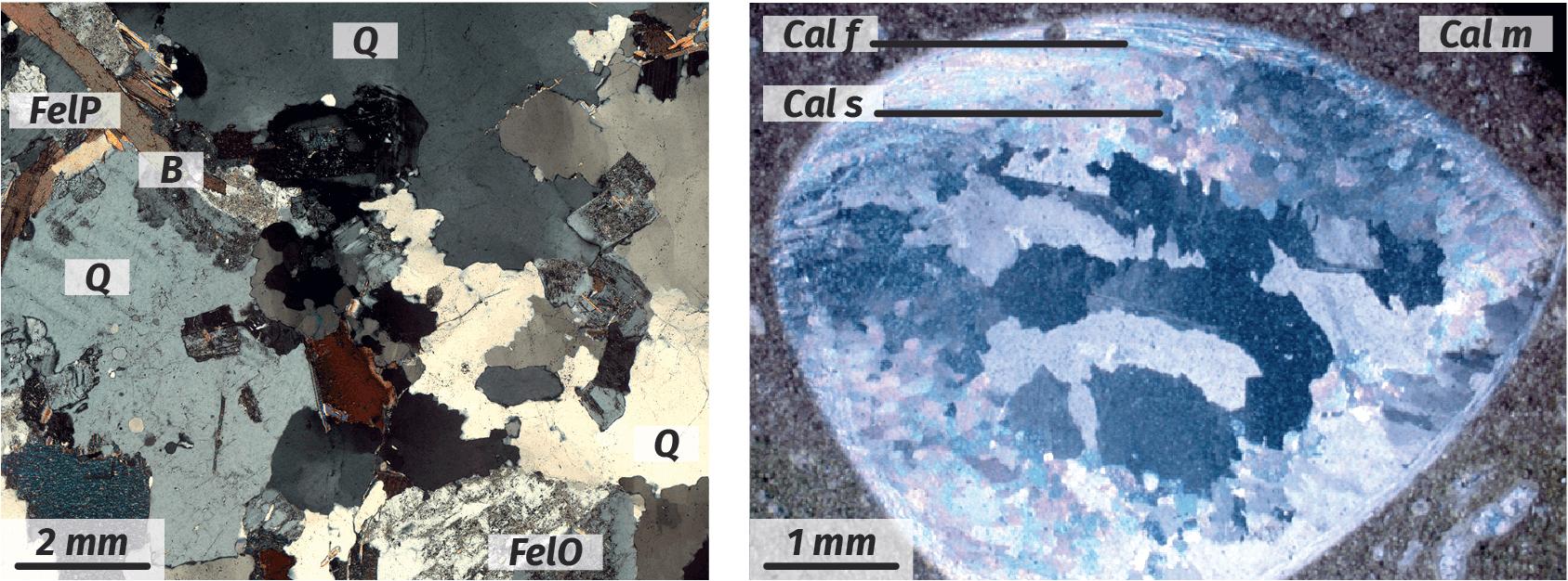 Observation au microscope polarisant d'un granite et d'un calcaire coquillier