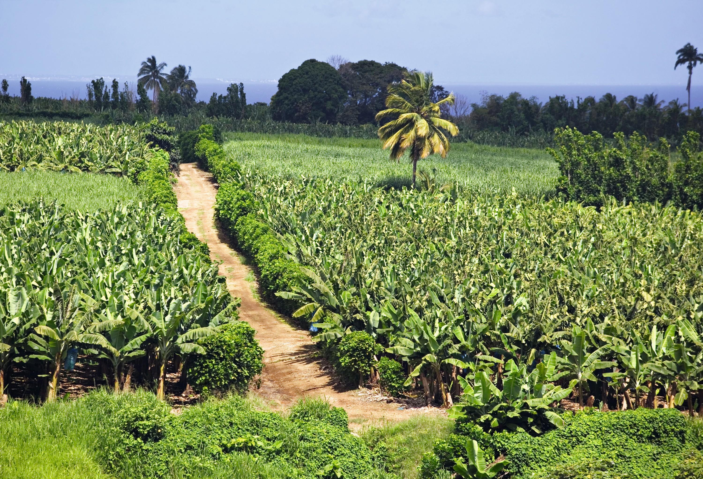 Plantation sur l'île de Basse‑Terre