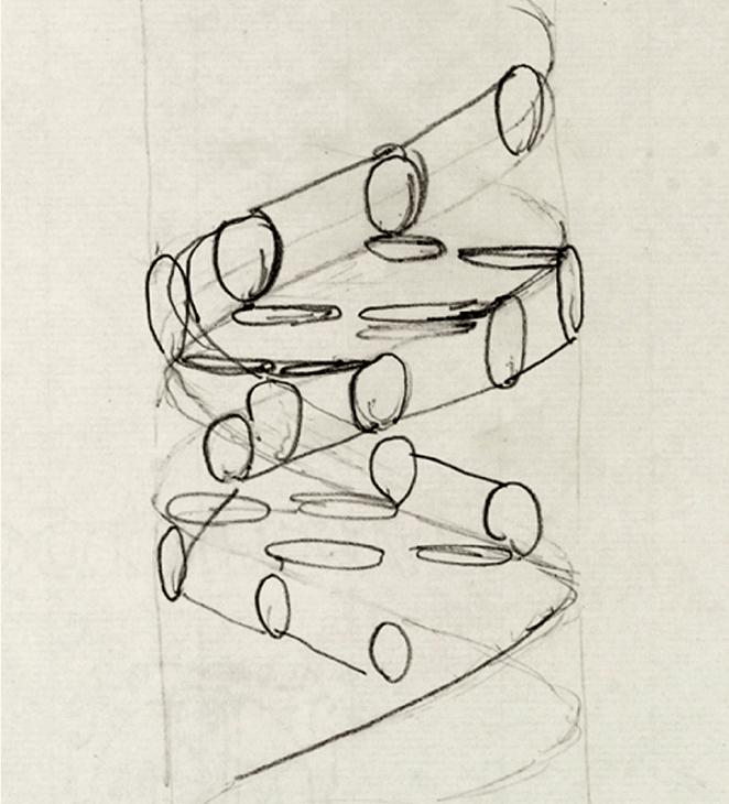 Schéma de la structure de l'ADN par Francis Crick