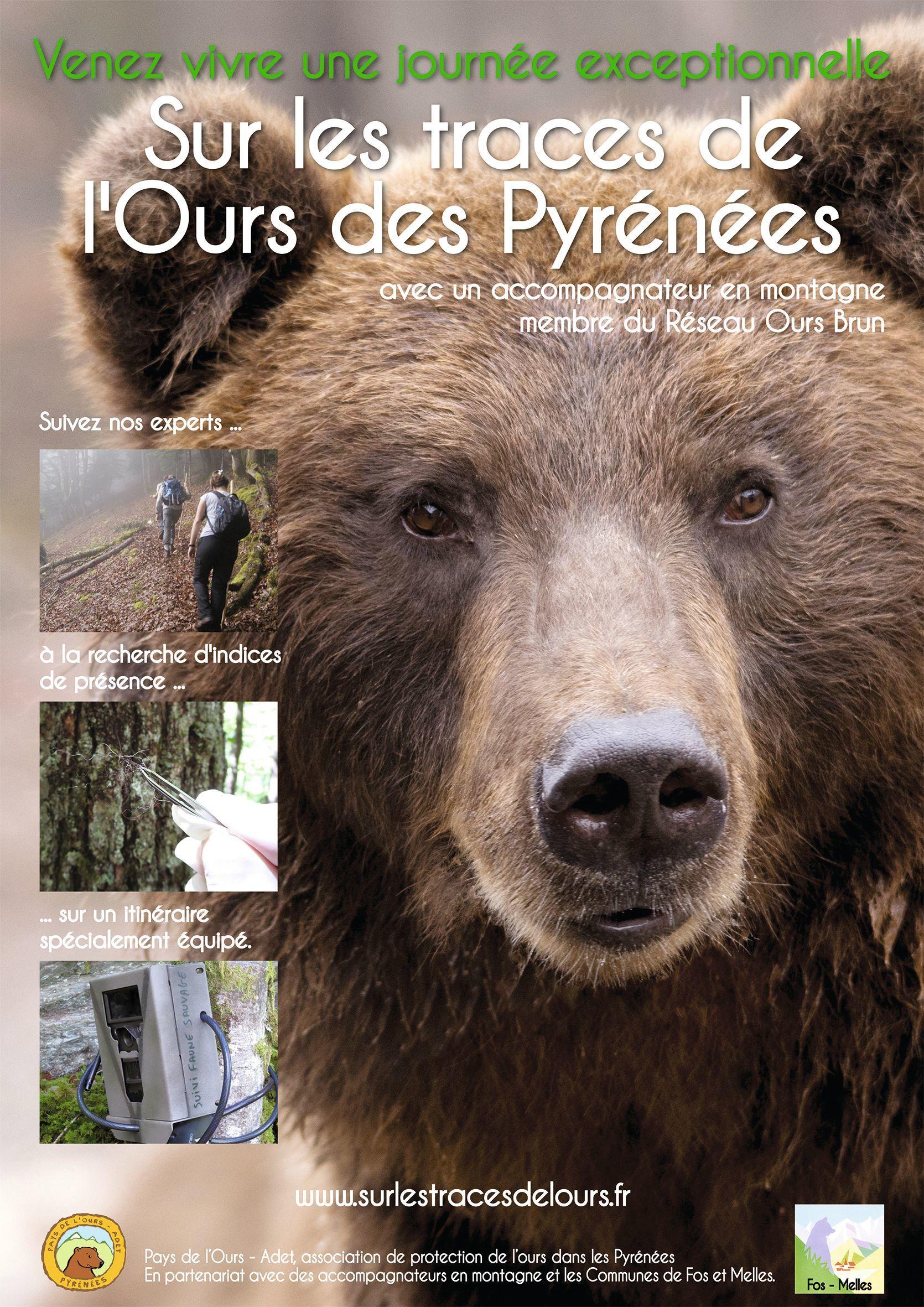 Des activités touristiques de découverte de l'ours