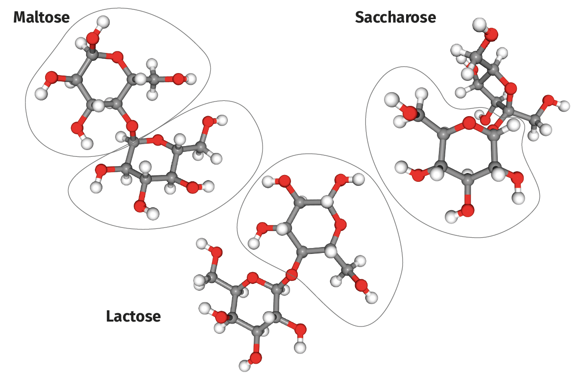Molécules de maltose, lactose et saccharose