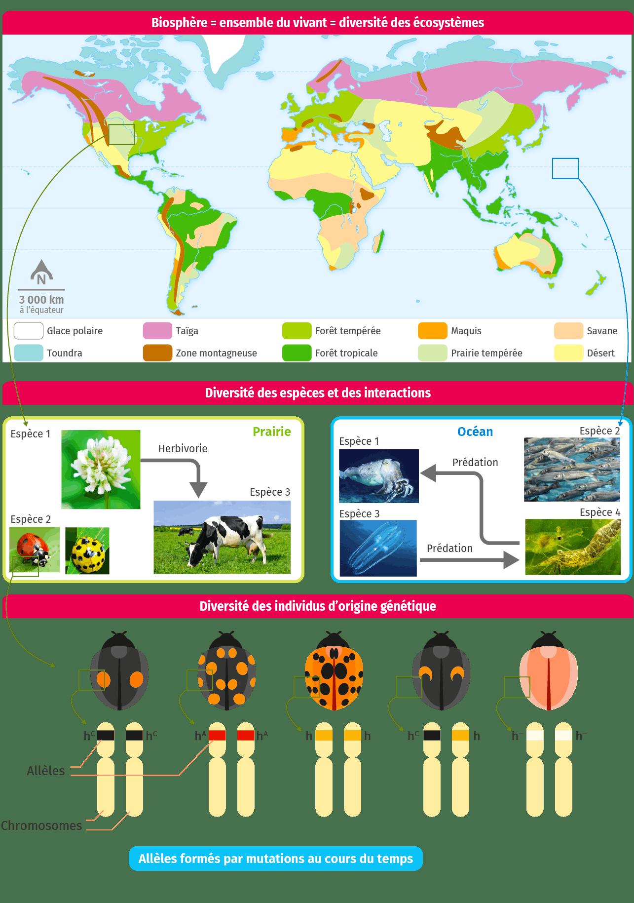 schéma bilan Les échelles de la biodiversité