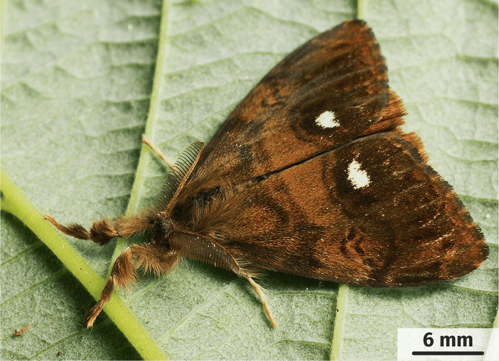 Le papillon présenté sur le forum