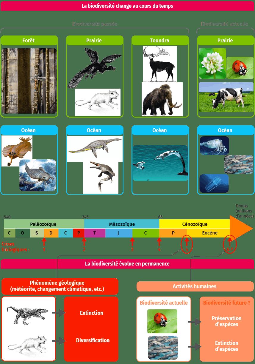 schéma bilan La biodiversité change au cours du temps