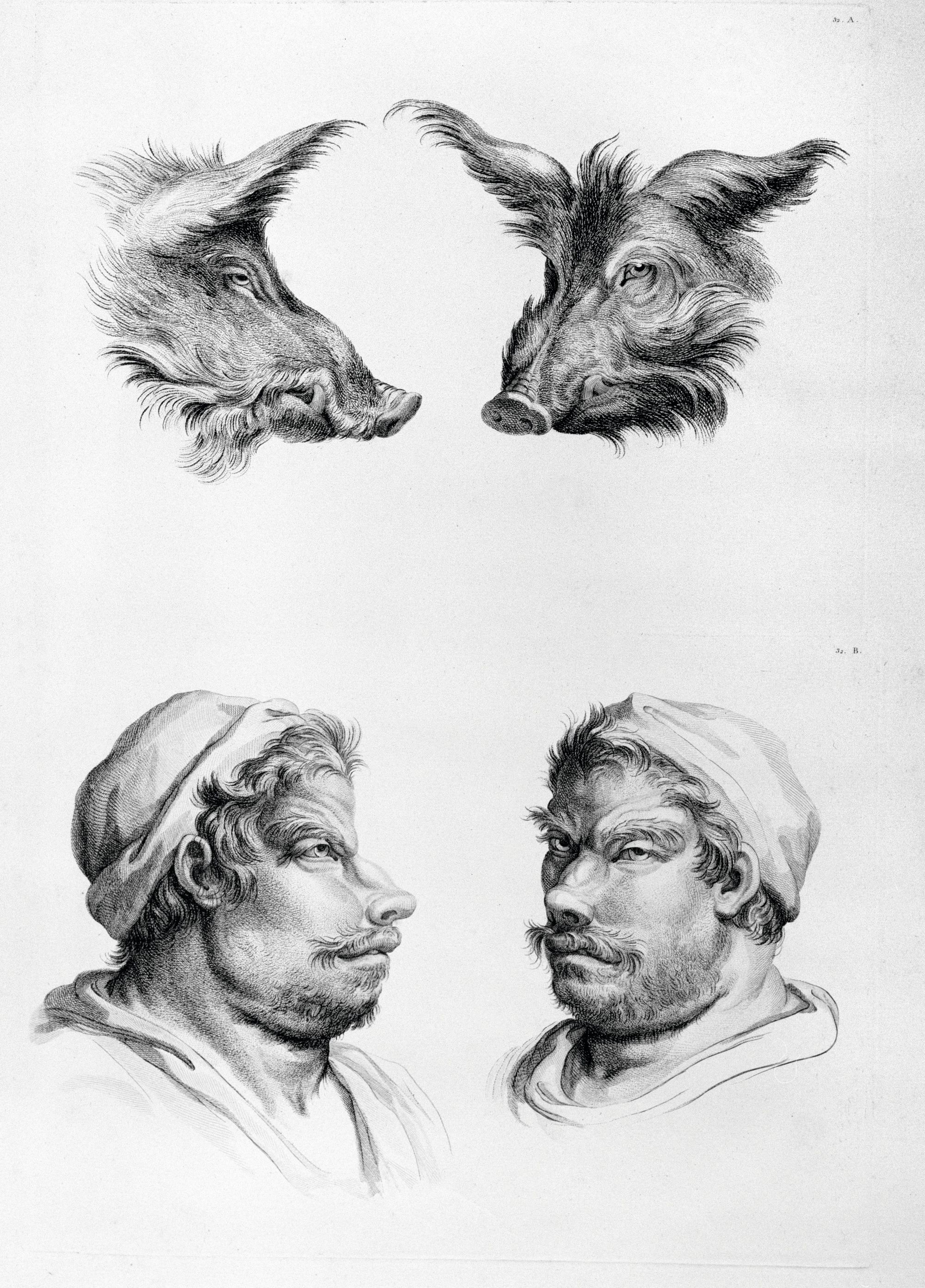 Charles Le Brun (d'après), « Rapport de la figure humaine avec celle du sanglier », Traité du rapport de la figure humaine avec celle des animaux, 1672.