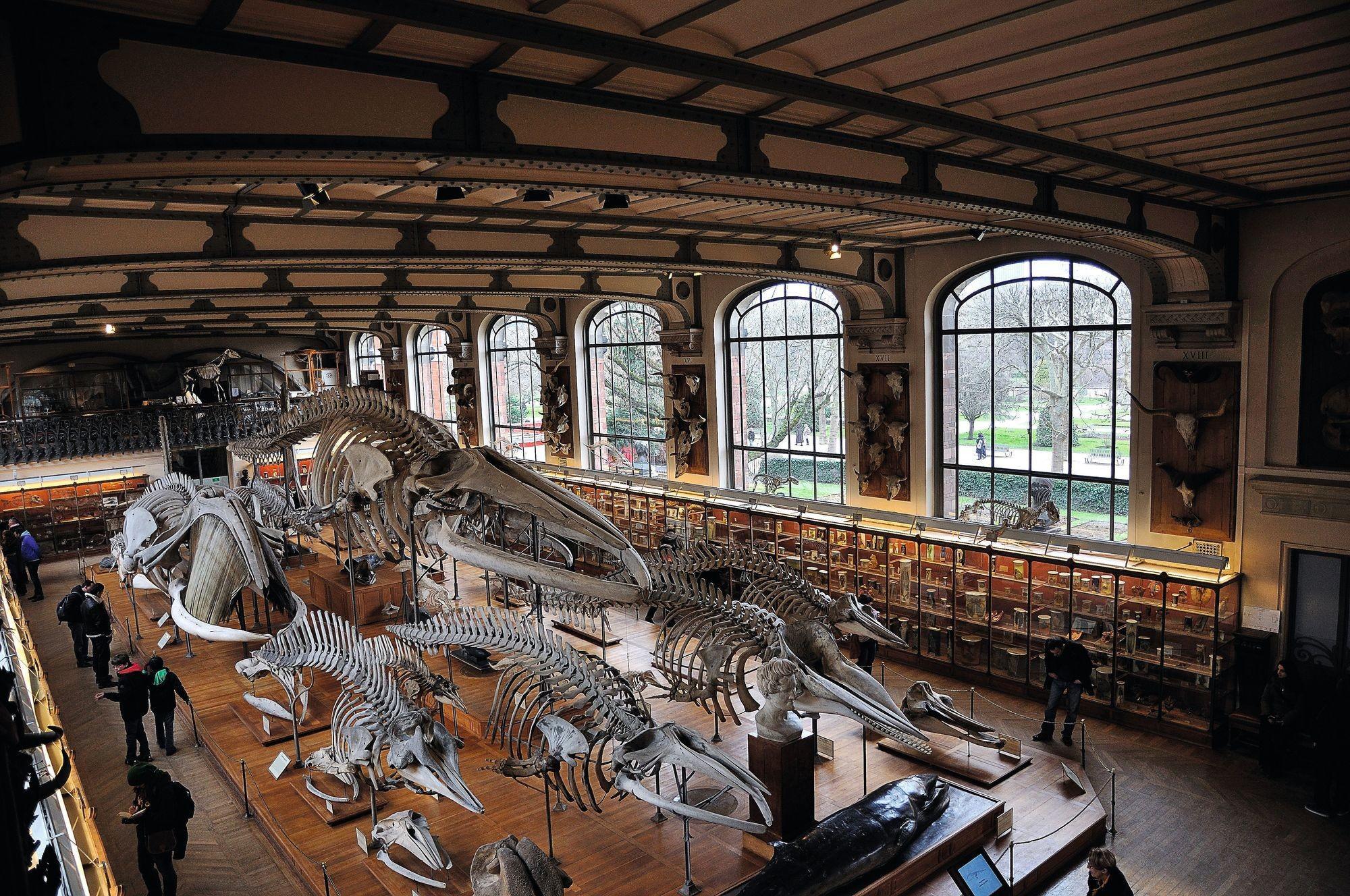 Le Muséum national d'histoire naturelle, prolongement numérique