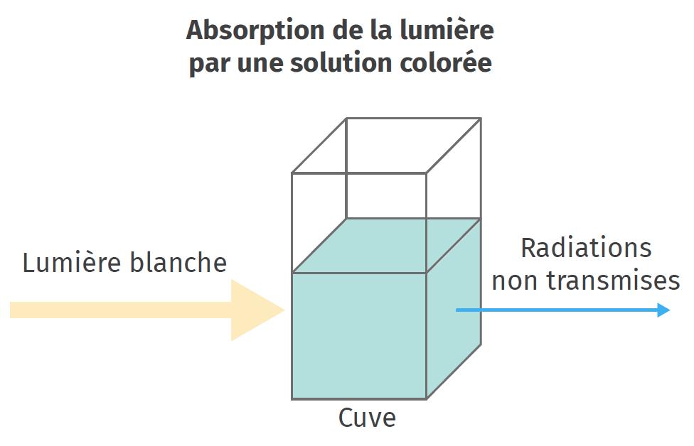 Absorption de la lumière