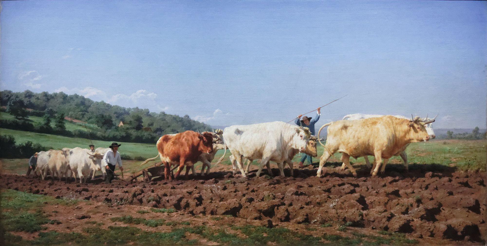Rosa Bonheur, Labourage nivernais, 1849, huile sur toile, 134 x 260 cm, musée d'Orsay, Paris.