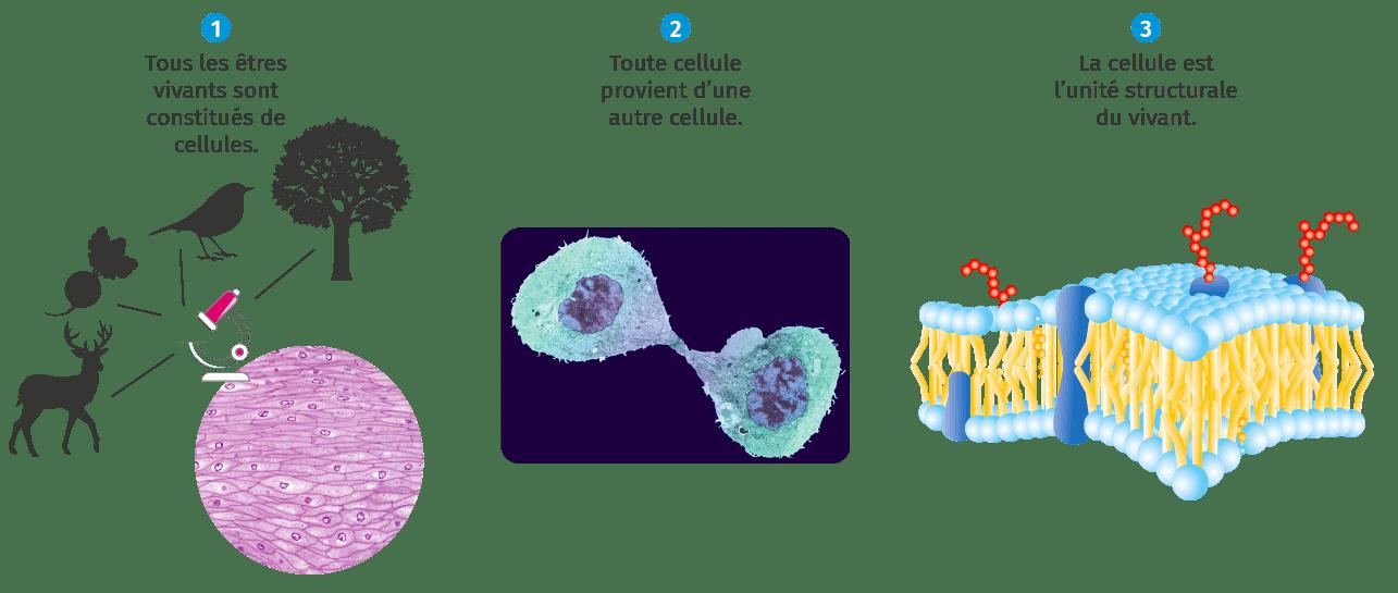 Les trois postulats de la théorie cellulaire