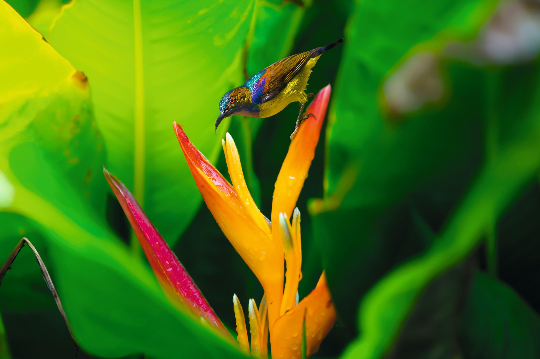 Oiseau plante