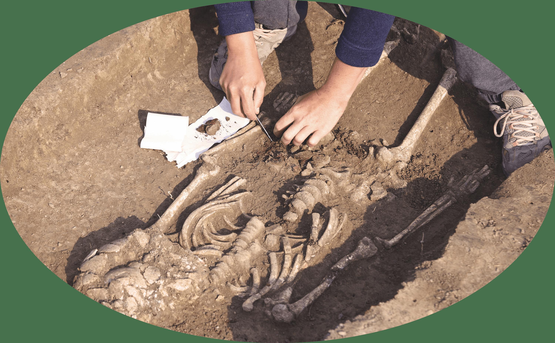 Archéologue et paléonthologues