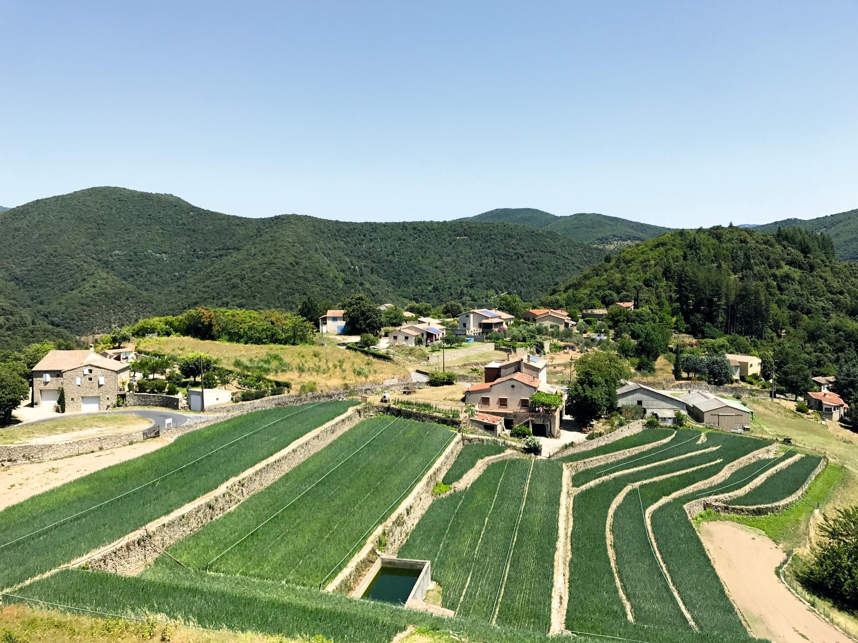 La culture en terrasses de l'oignon doux