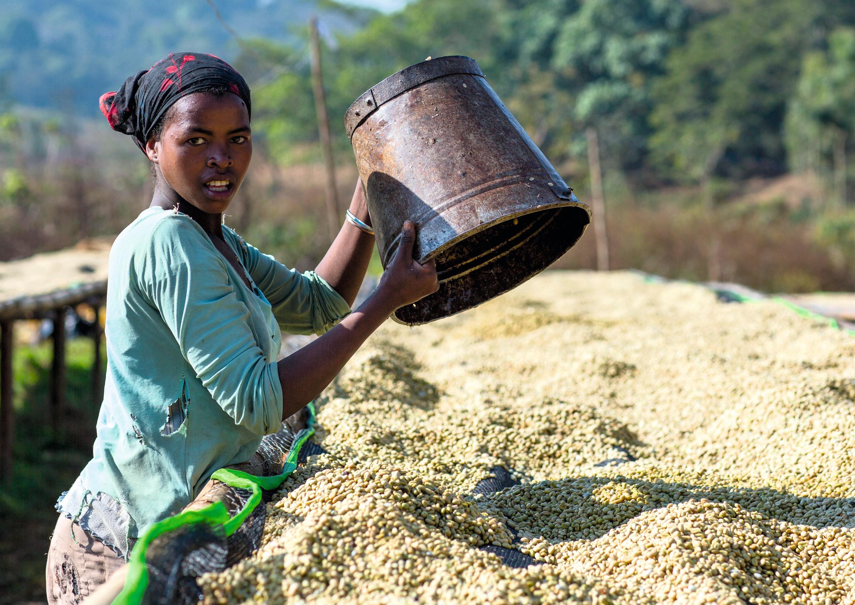 Jimma, Éthiopie