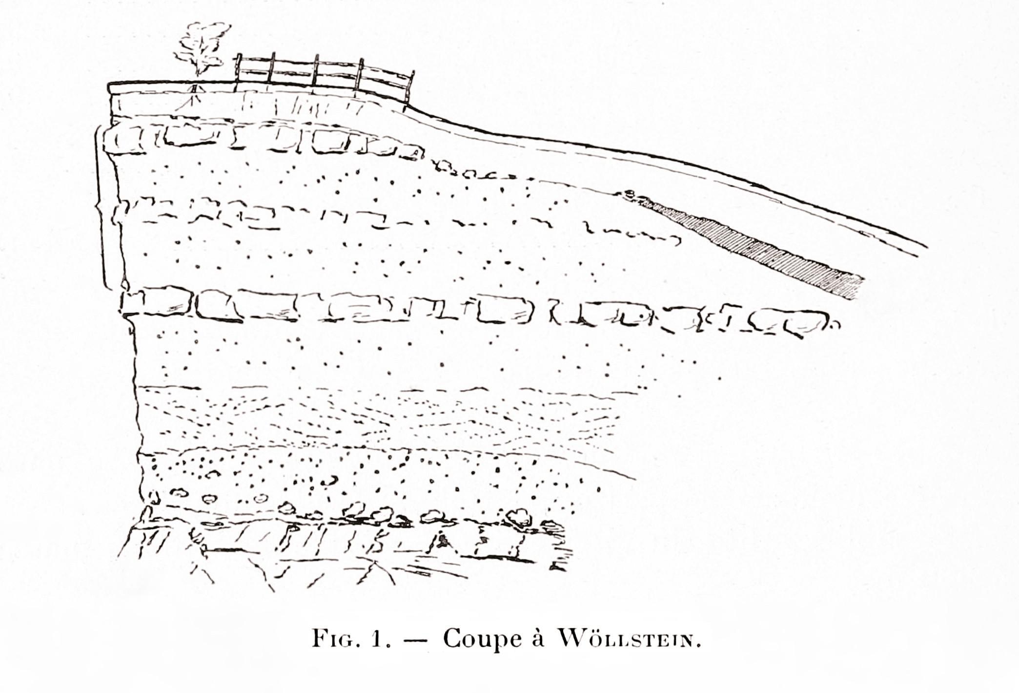 Coupe stratigraphique à Wöllstein (Allemagne)