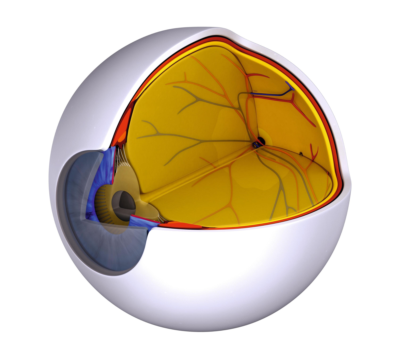 Modélisation de l'œil