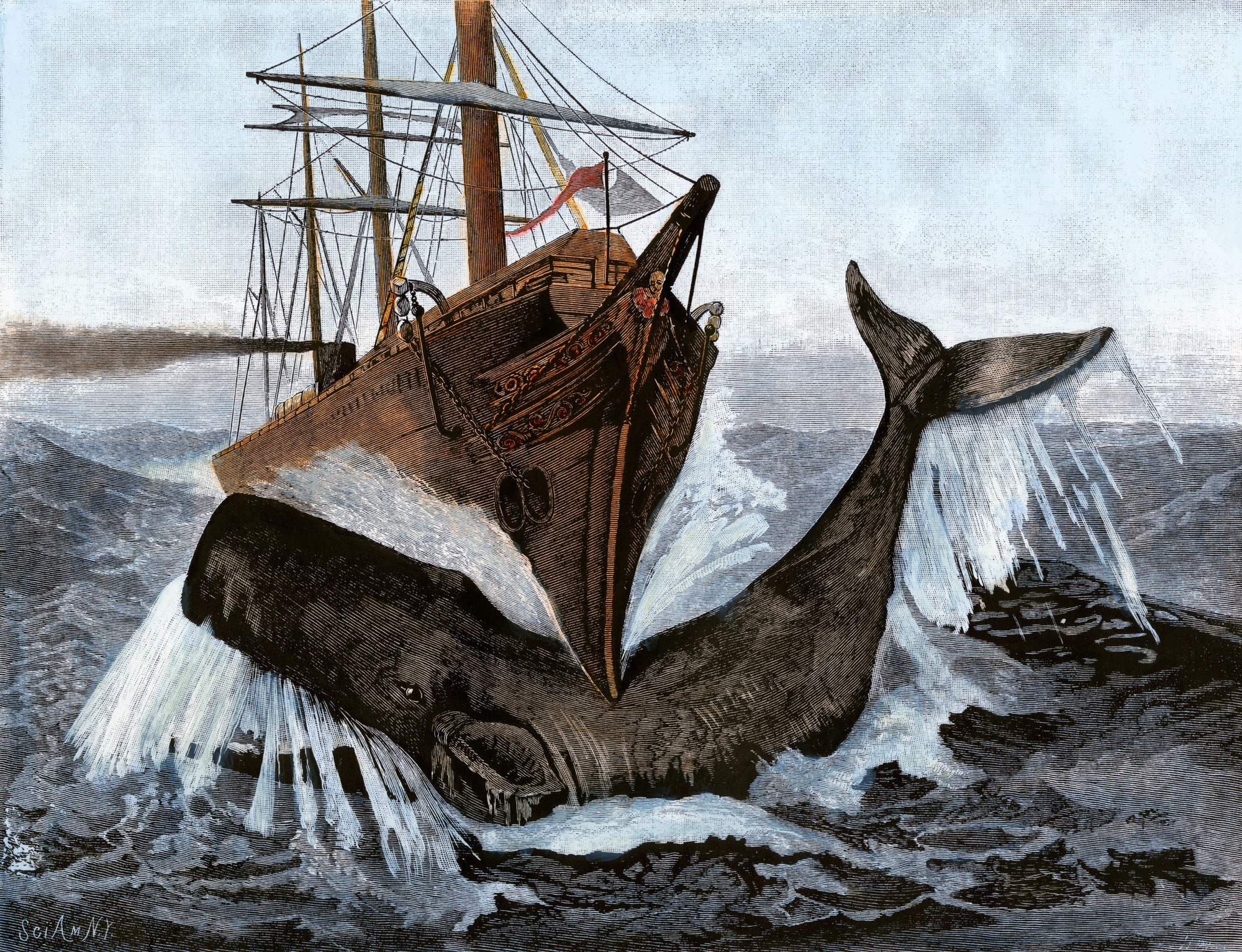 Bow of the ship Essex after striking a whale, 1820.