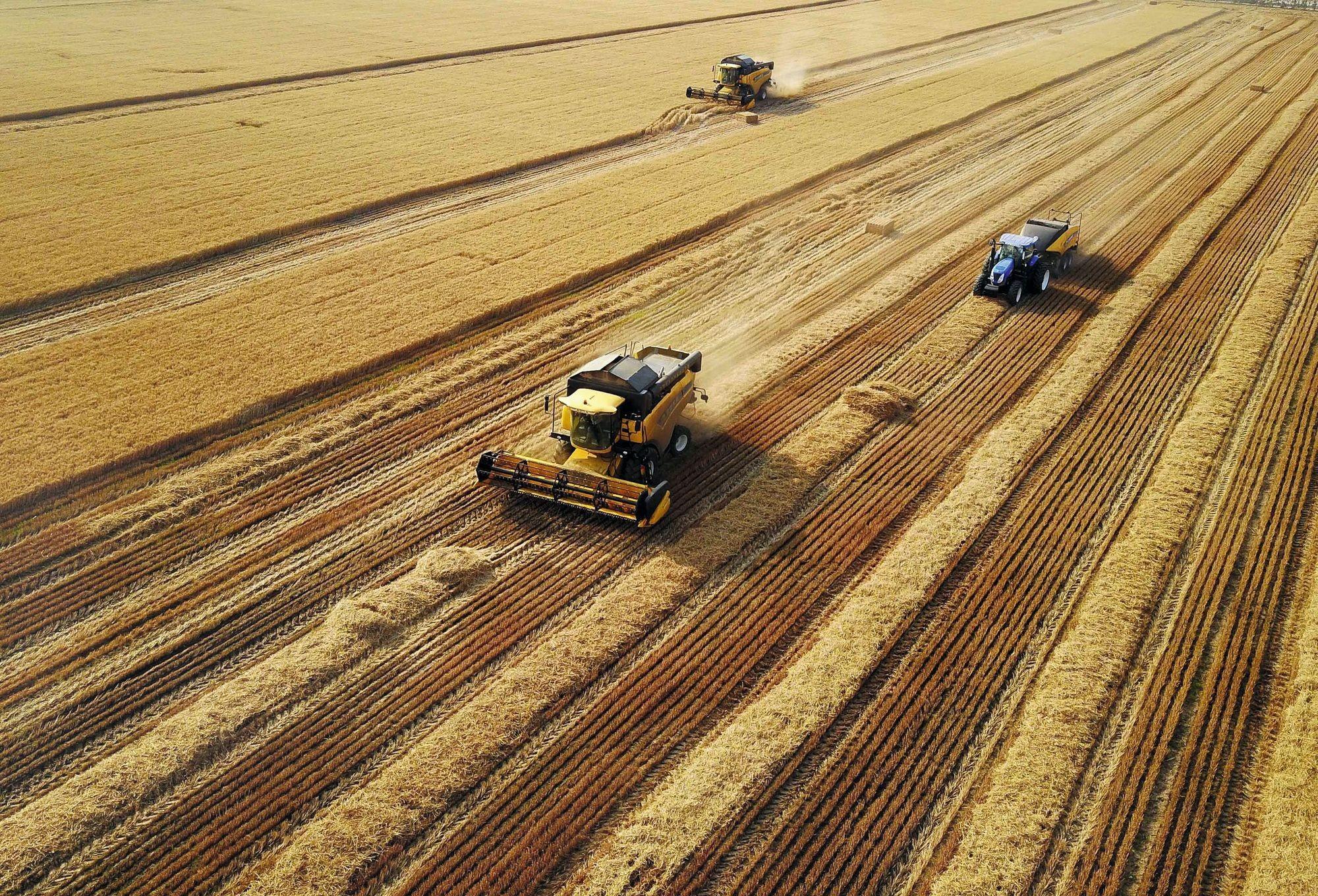 récolte de blé dans le Henan