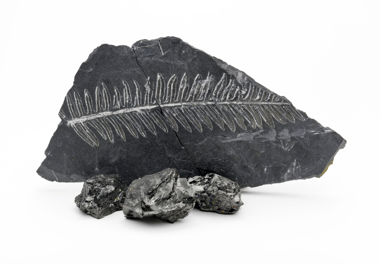 Observation de roches carbonées